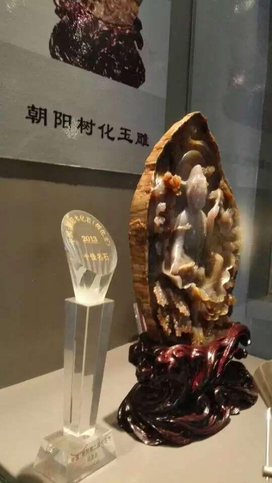 朝阳木化石